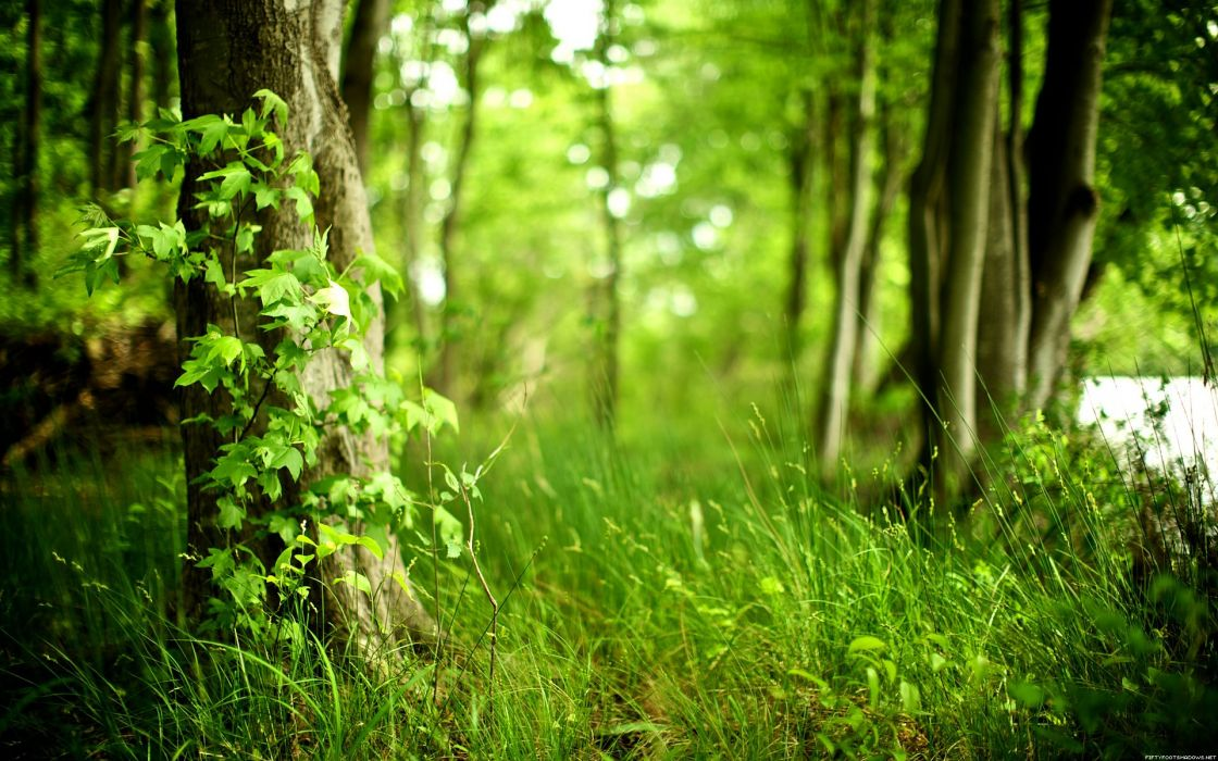 nature trees forests plants wallpaper