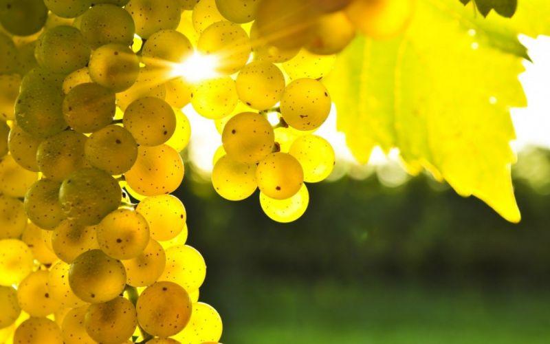 nature white grapes wallpaper
