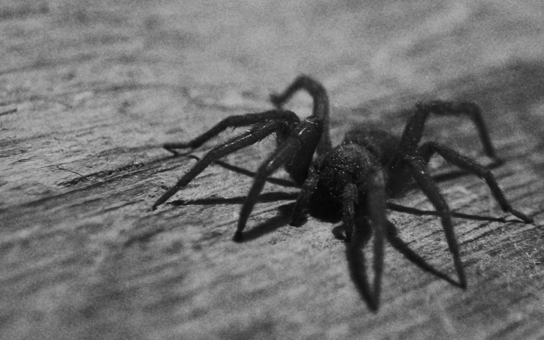 insects spiders wallpaper