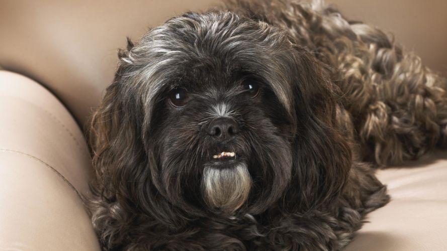 animals dogs portraits wallpaper