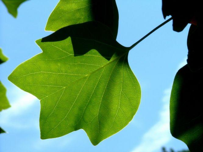 nature leaves wallpaper