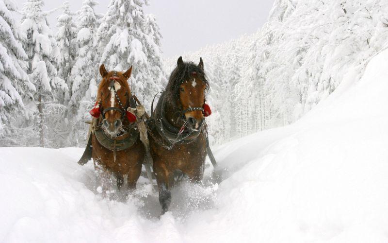 winter white frozen horses sleds wallpaper