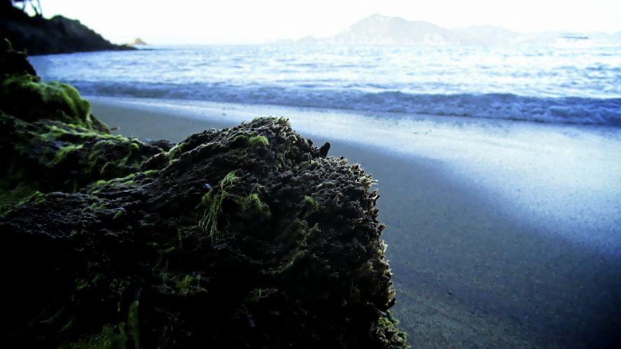 ocean moss sea beaches wallpaper