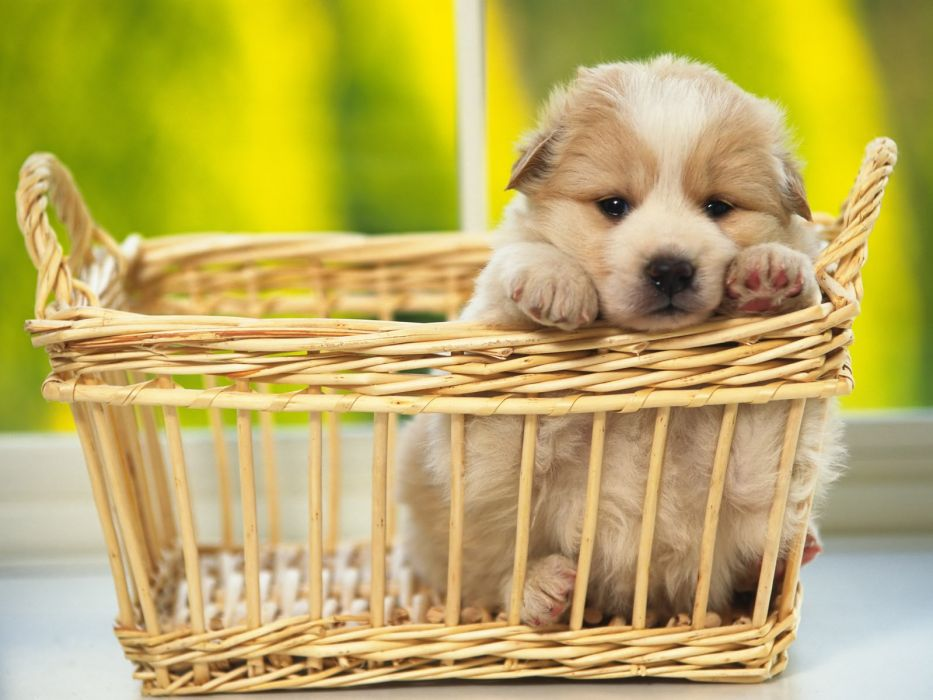 animals dogs puppies baskets pets wallpaper