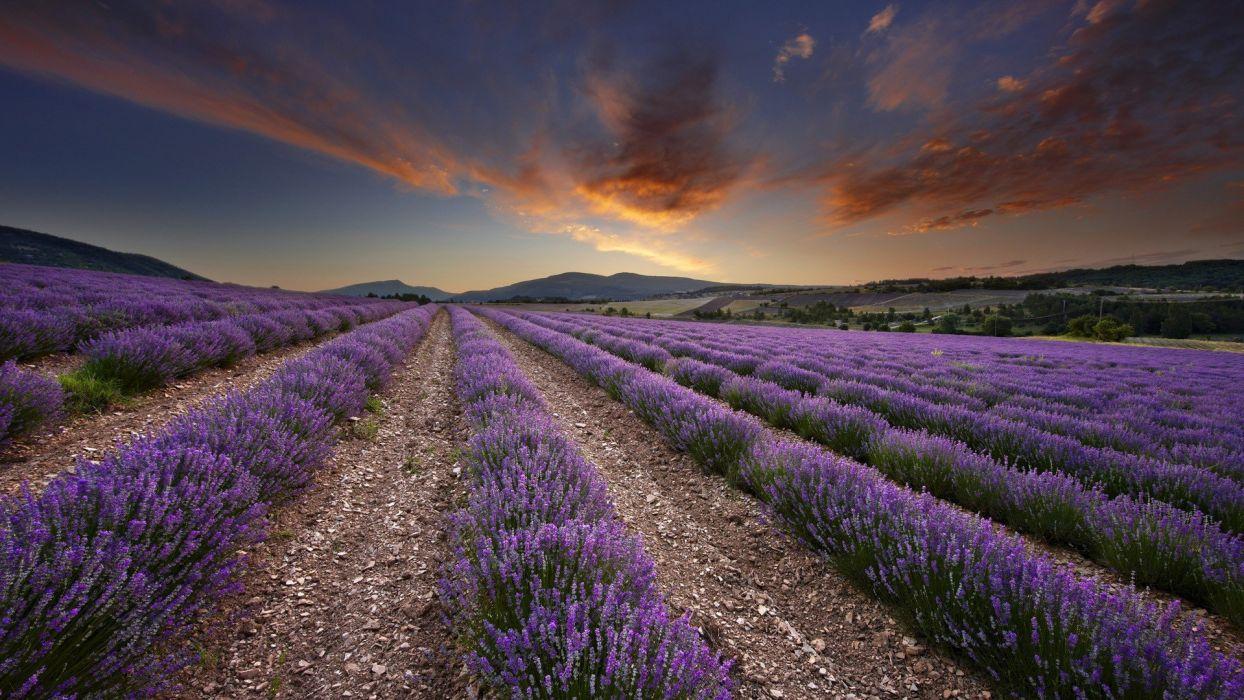 dawn France lavender wallpaper