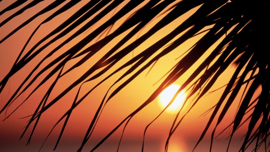 sunset leaf Sun silhouettes Jamaica palm leaves wallpaper