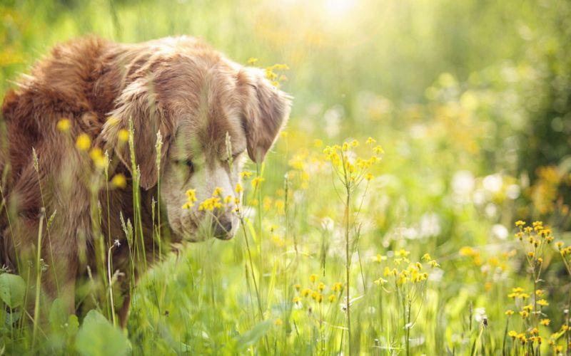 animals dogs bokeh depth of field wildflowers wallpaper