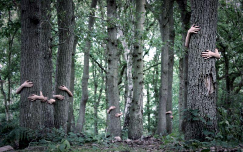 trees hands wallpaper