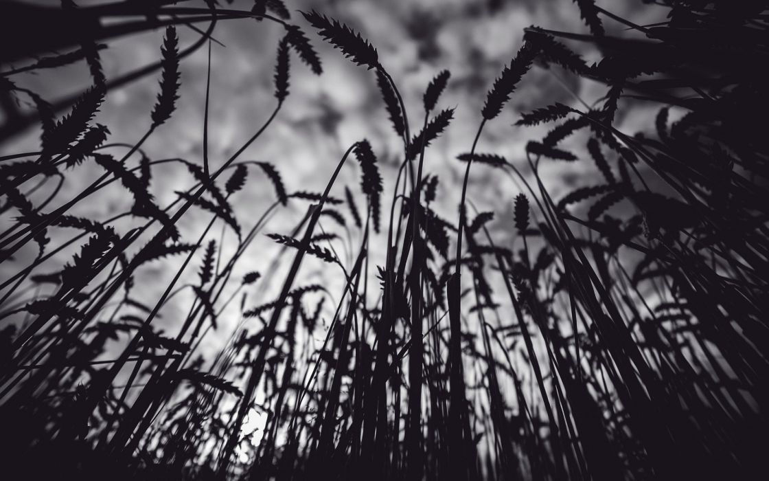 fields wallpaper