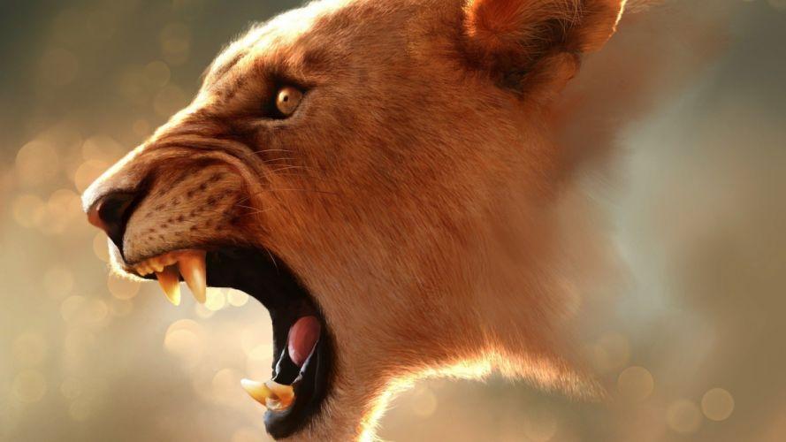 animals feline lions wild wallpaper