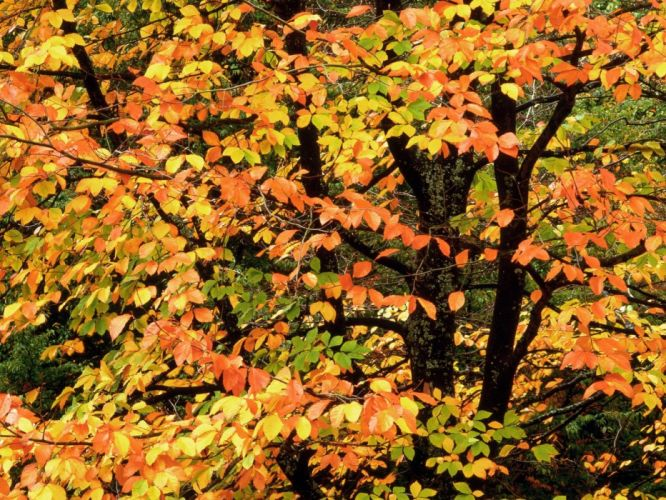 nature autumn beech Portland parks Washington wallpaper