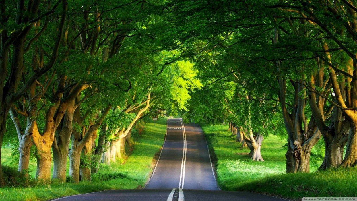 green trees grass summer roads wallpaper