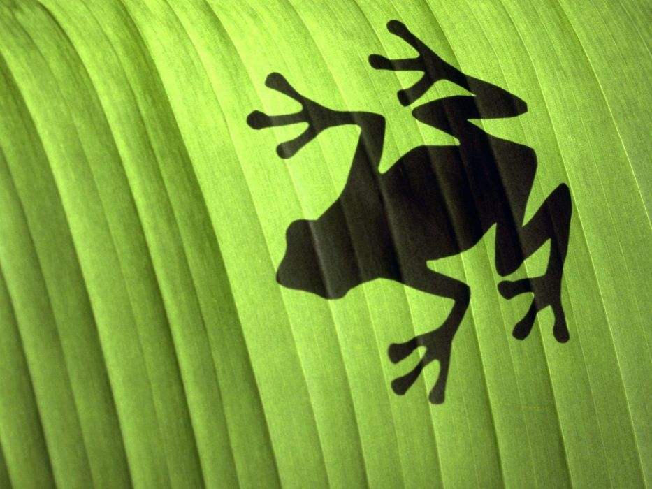 leaves shadows frogs wallpaper