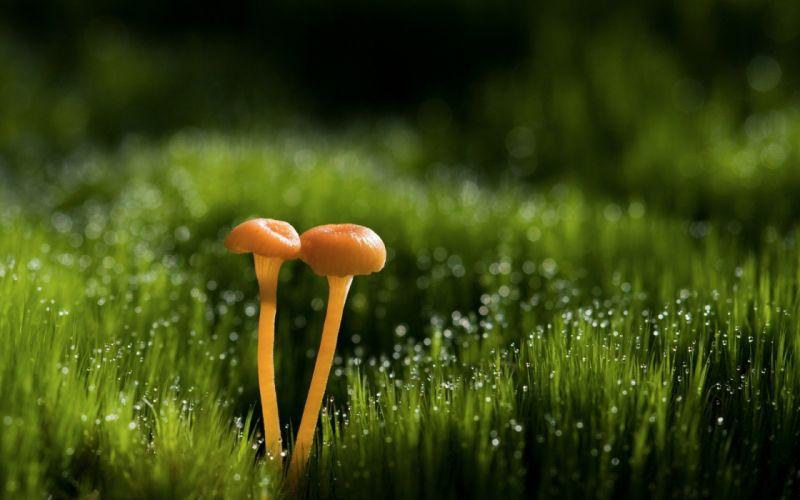 nature grass mushrooms dew wallpaper