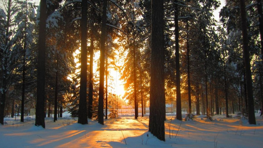 nature snow trees forests sunlight wallpaper