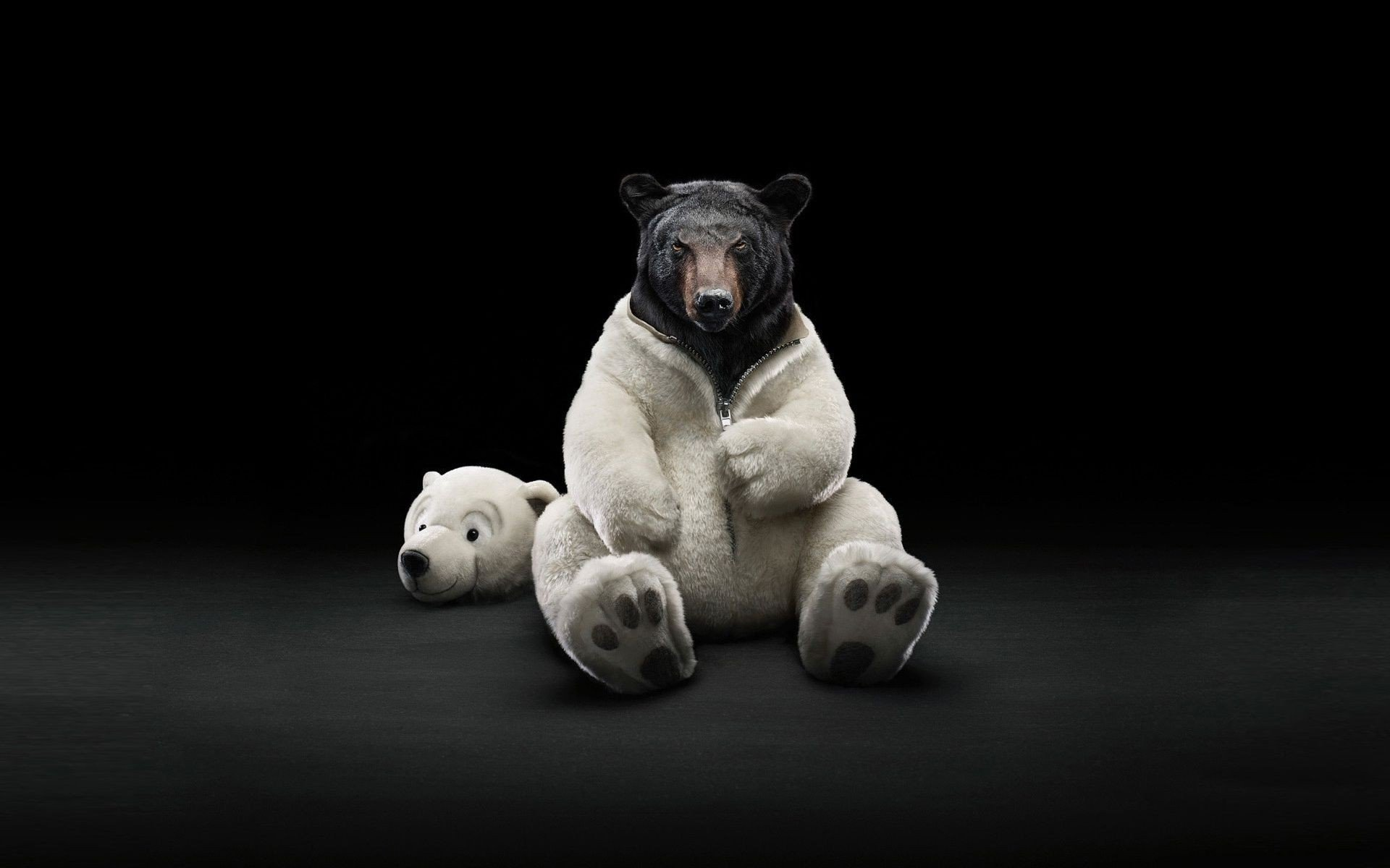 costume bears polar bears black bear wallpaper | 1920x1200 | 273815
