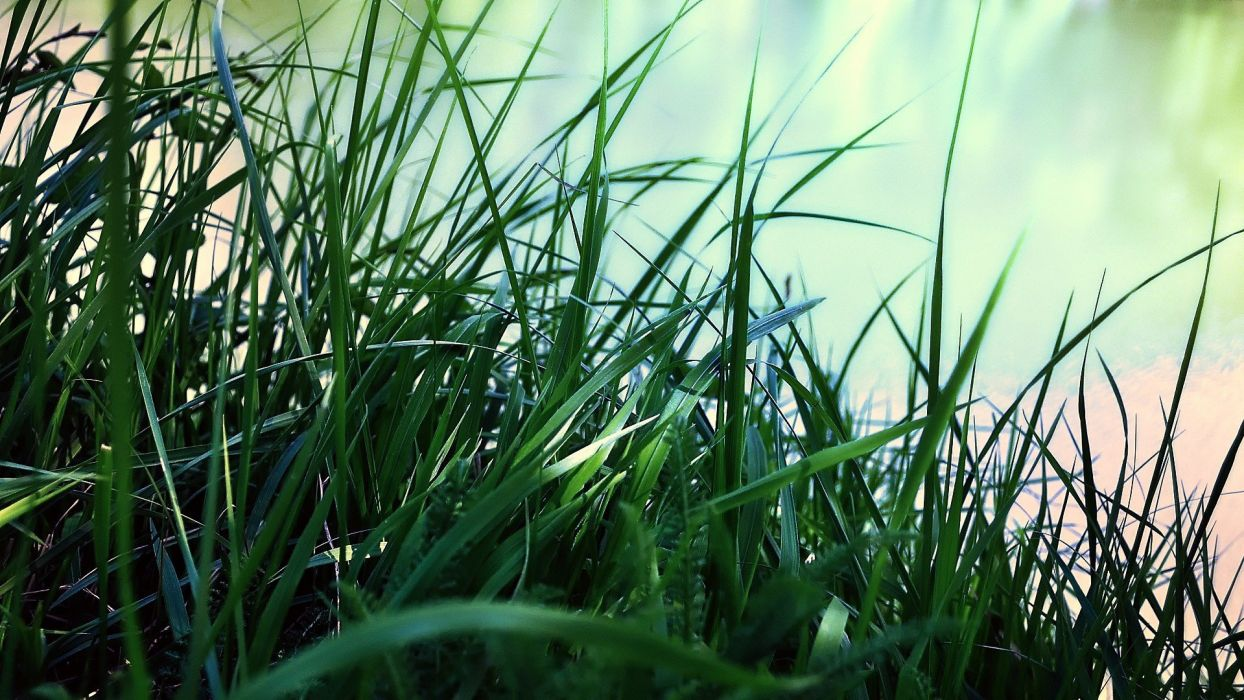 green nature grass pasture wallpaper