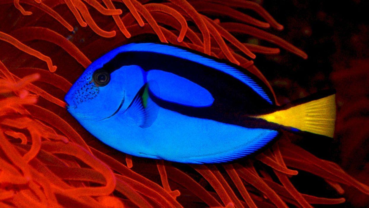 blue ocean fish coral wallpaper