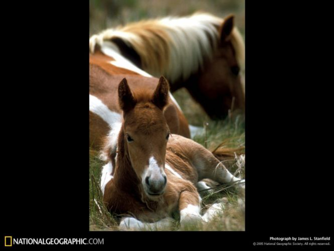 National Geographic horses wallpaper