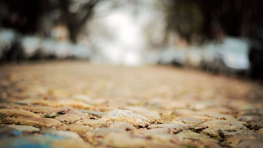 leaves paths hardscapes ground wallpaper