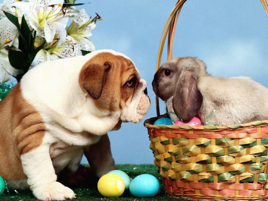 stare Easter wallpaper