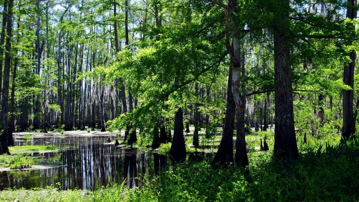 landscapes forests swamps wallpaper