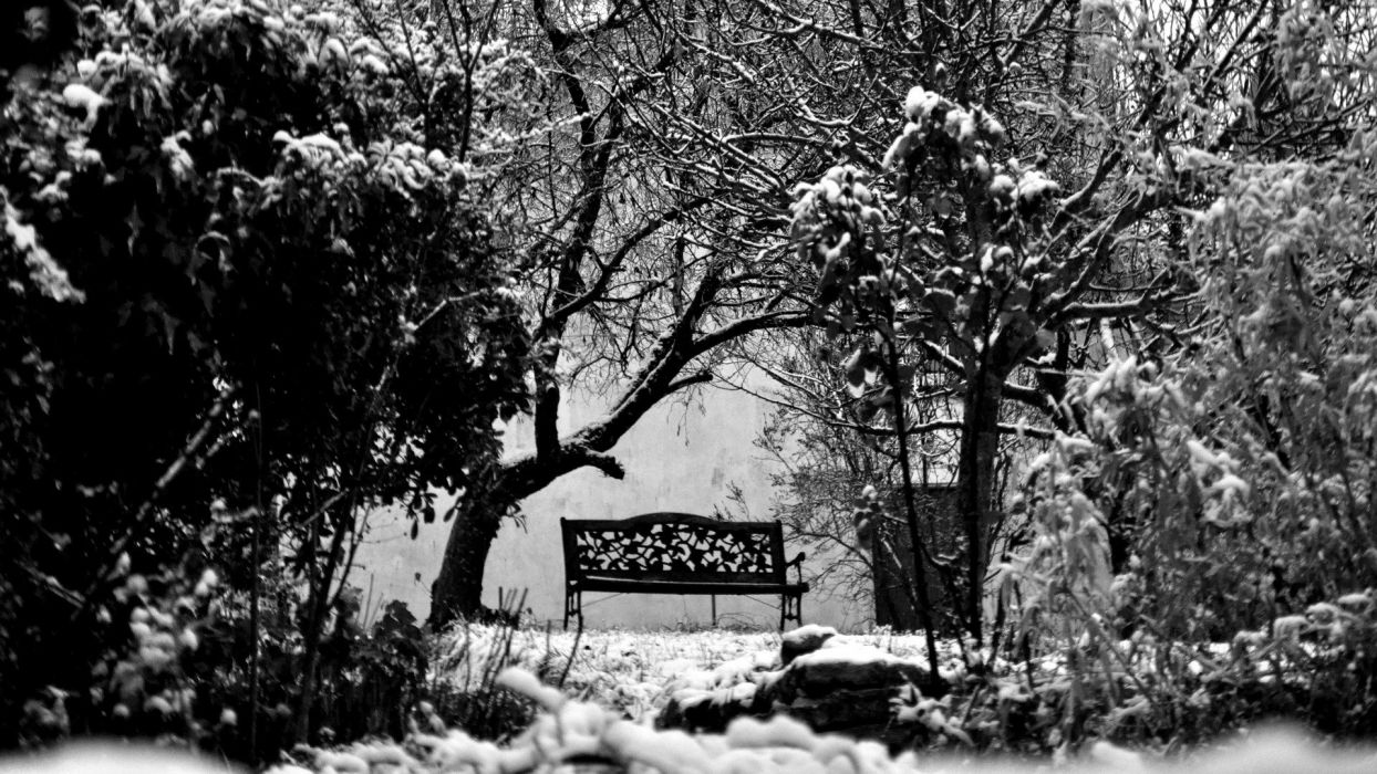 winter snow trees bench grayscale monochrome wallpaper