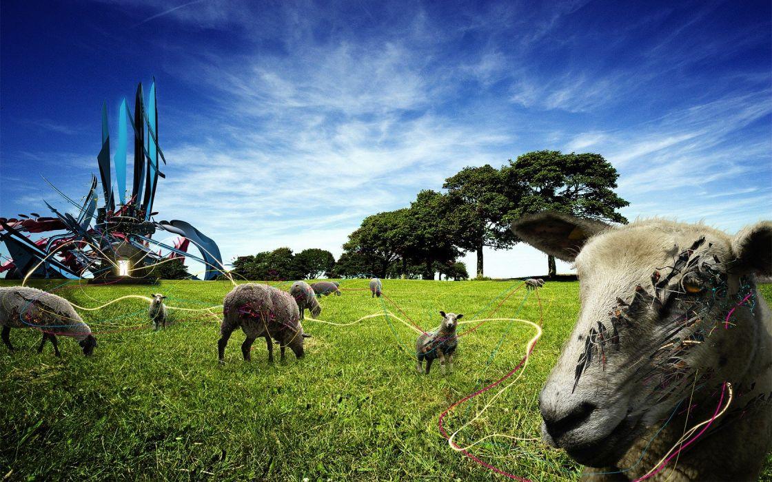 animals retro funny weird sheep wallpaper