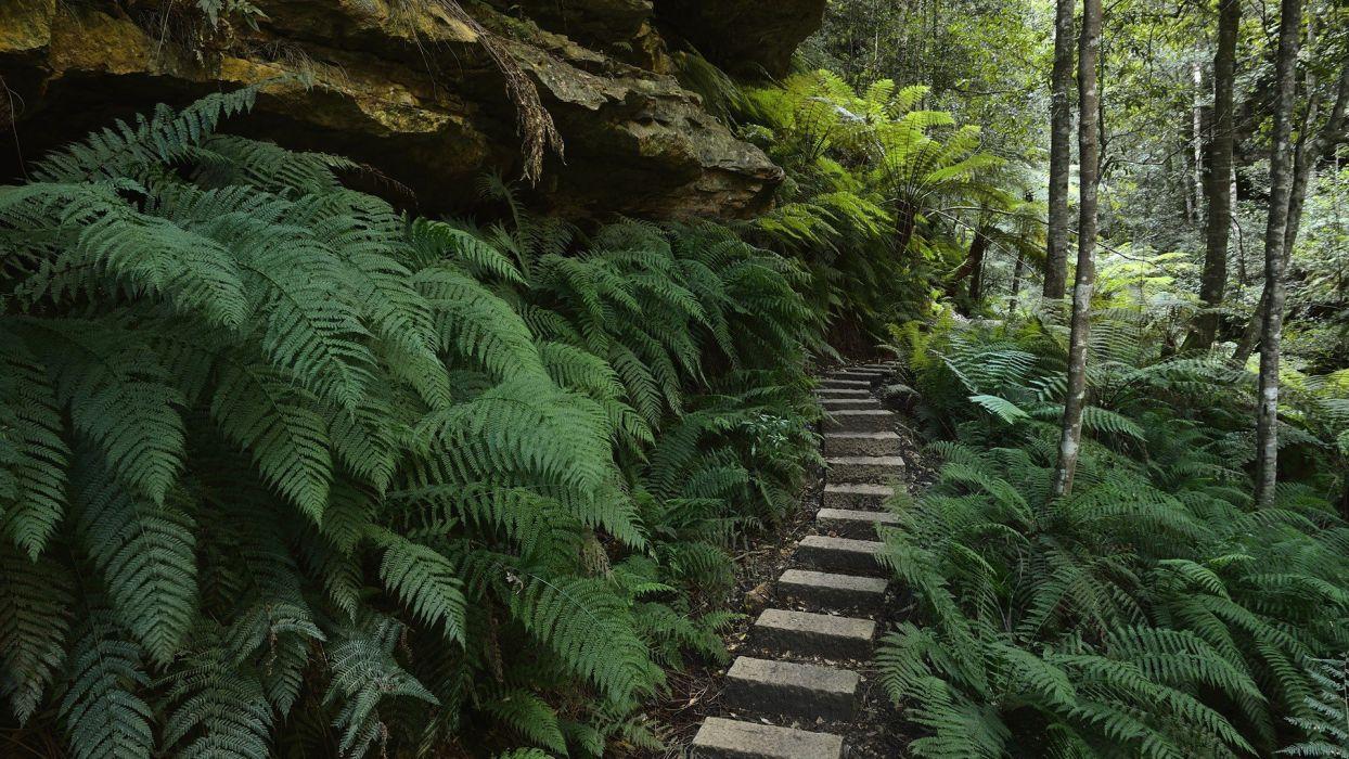 blue mountains Australia ferns National Park New South Wales wallpaper