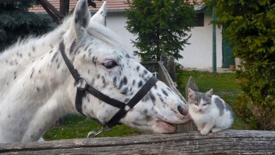 nature cats animals kissing horses wallpaper