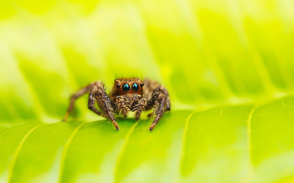 insects leaves macro spiders wallpaper