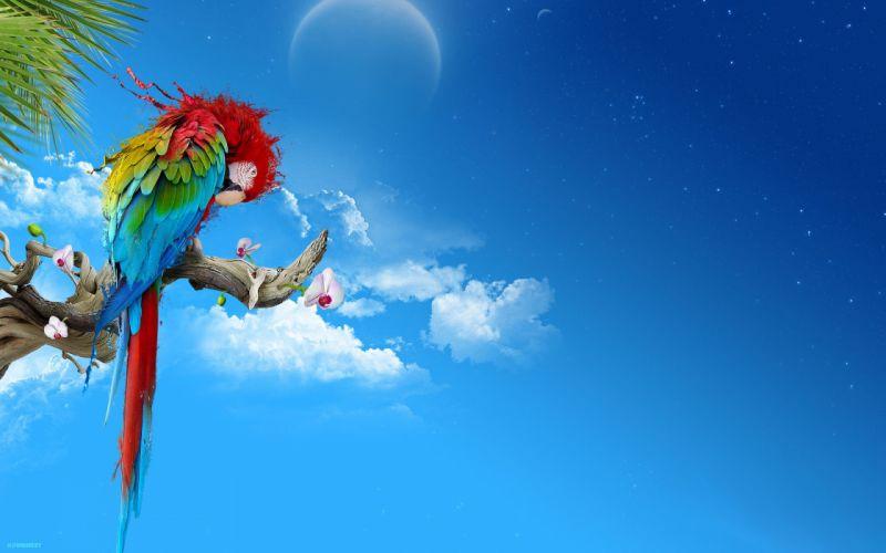 multicolor Moon parrots skyscapes Scarlet Macaws wallpaper