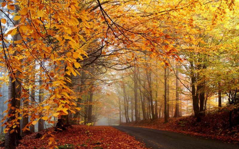 trees autumn yellow roads wallpaper