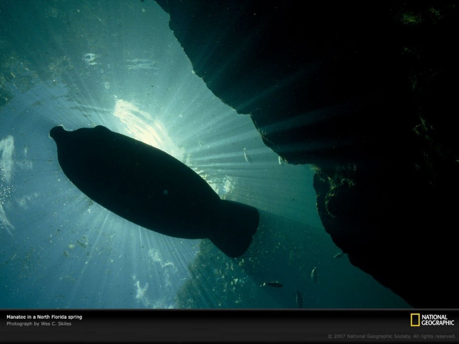 nature National Geographic underwater sea wallpaper