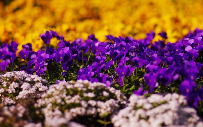 nature flowers bokeh depth of field purple flowers wallpaper