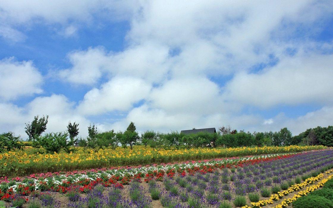 landscapes nature flowers plantation wallpaper