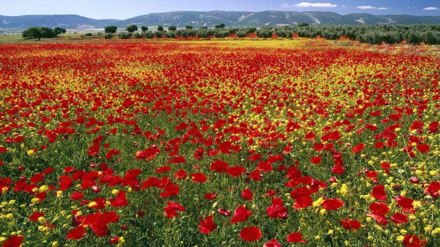 mountains flowers fields endless Spain poppy wallpaper