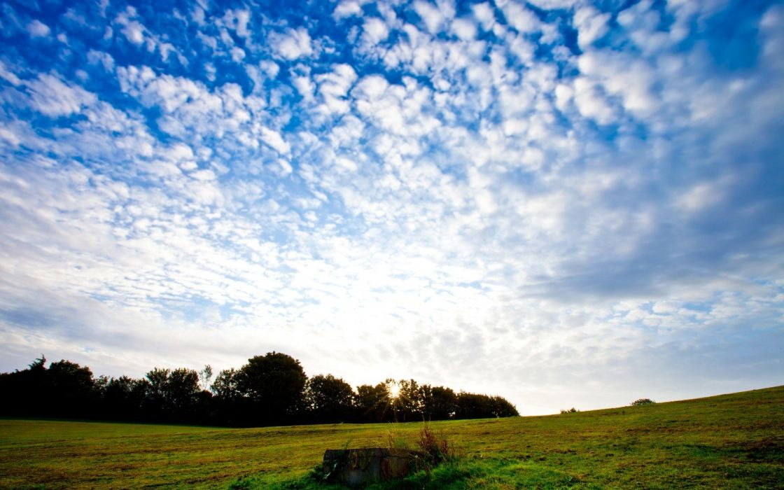 nature forests fields skyscapes wallpaper
