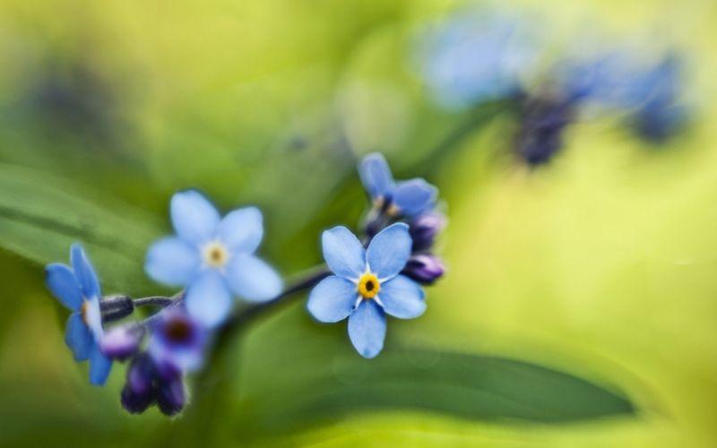 nature flowers macro wallpaper