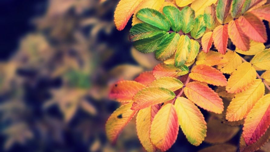 nature autumn leaves wallpaper