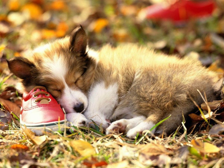 animals dogs shoes canine pets wallpaper
