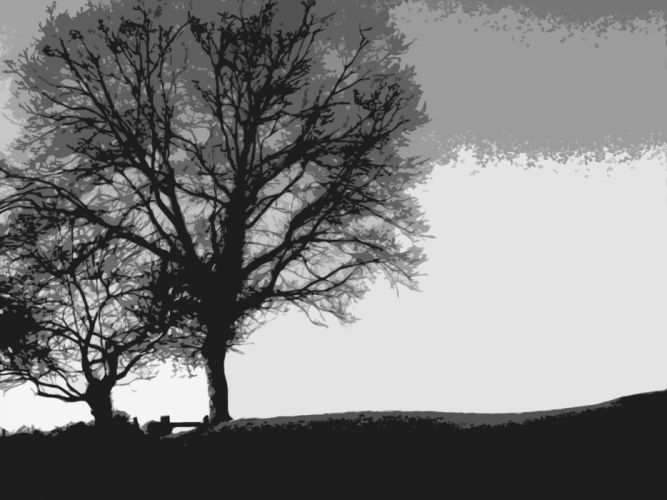 black and white minimalistic trees wallpaper
