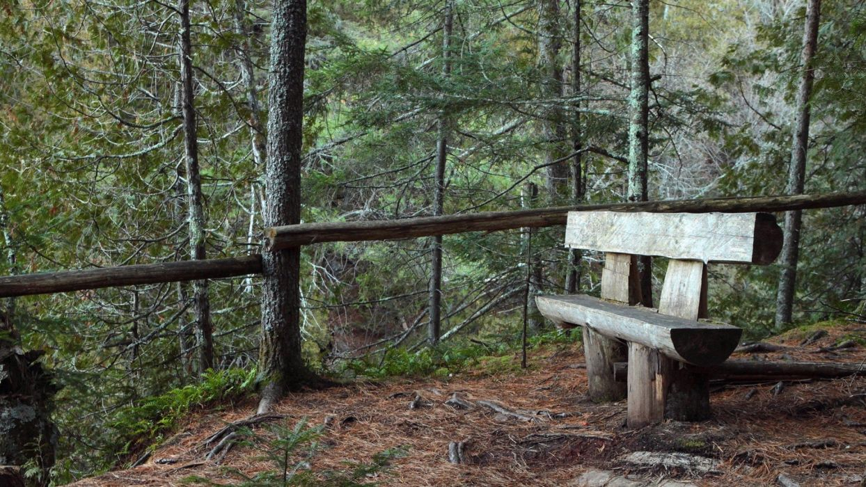 landscapes nature forests bench wallpaper