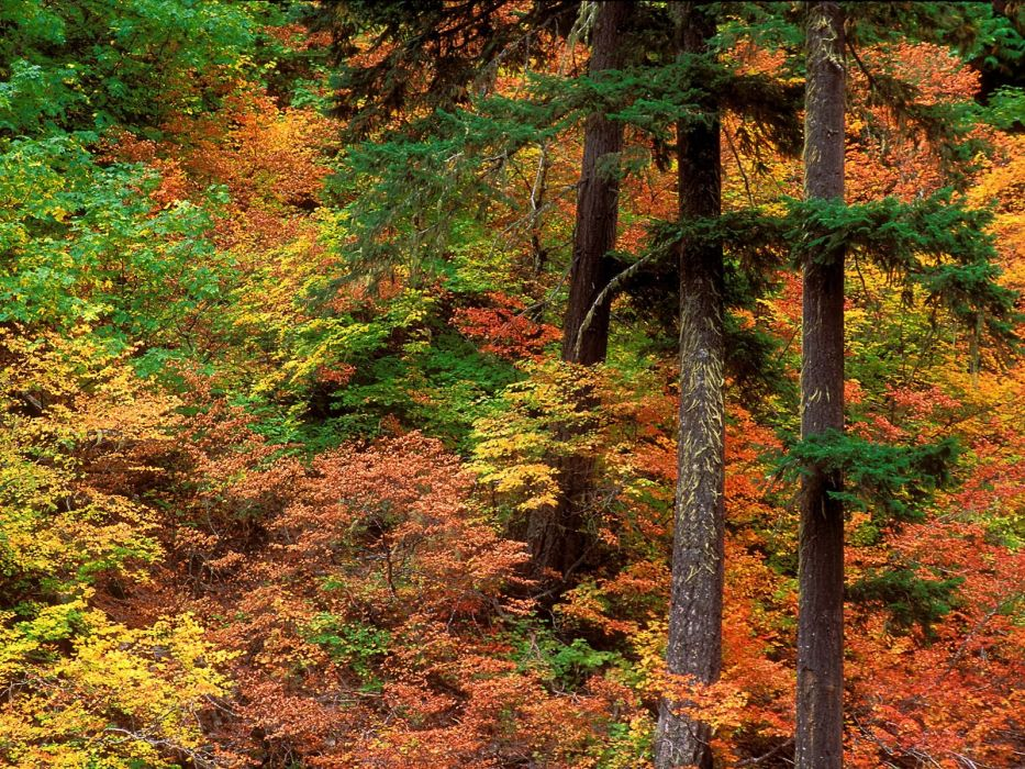 nature trees forests wallpaper