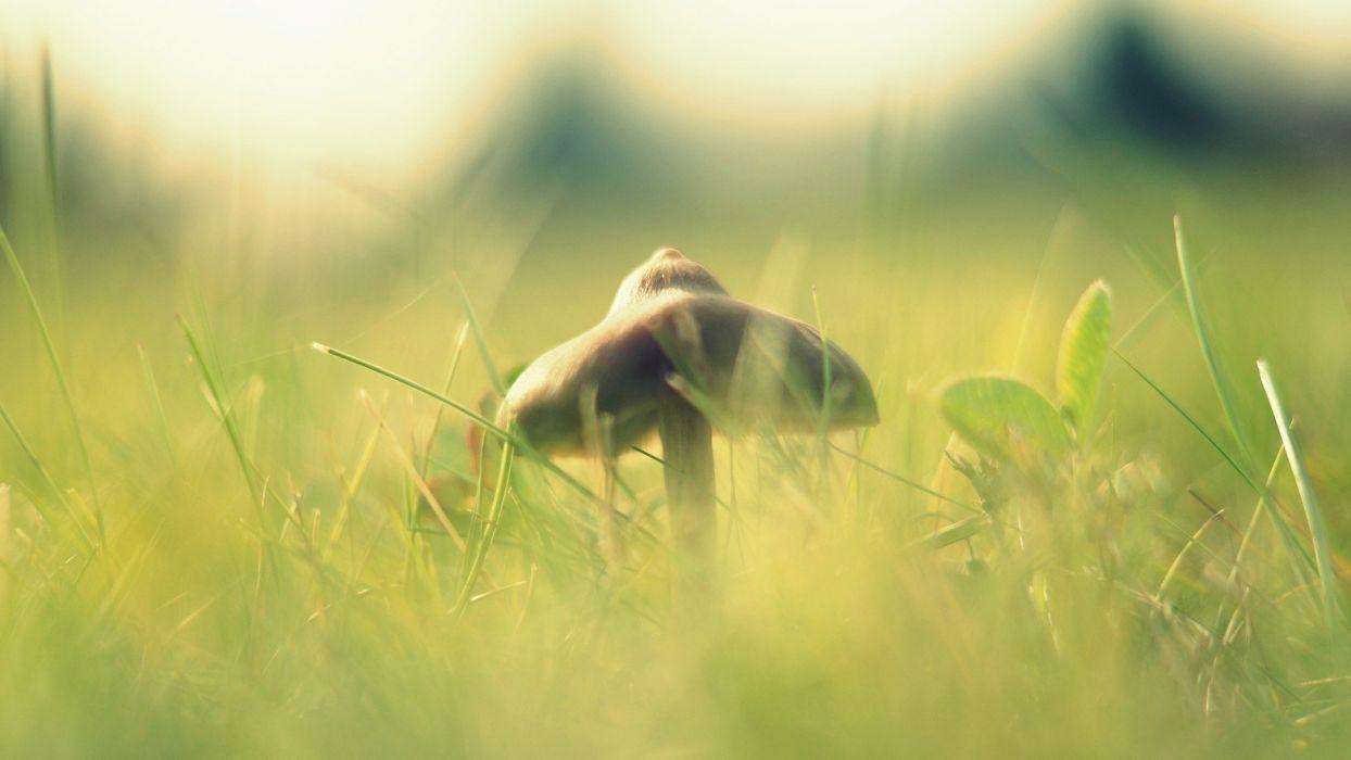 nature grass mushrooms macro wallpaper