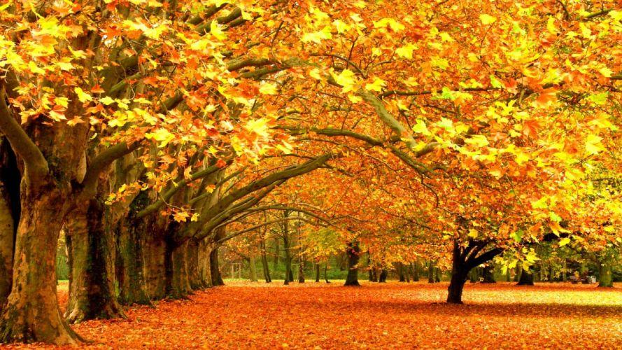 landscapes trees autumn parks wallpaper