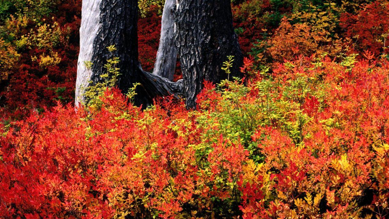 autumn Baker Washington Mount wallpaper