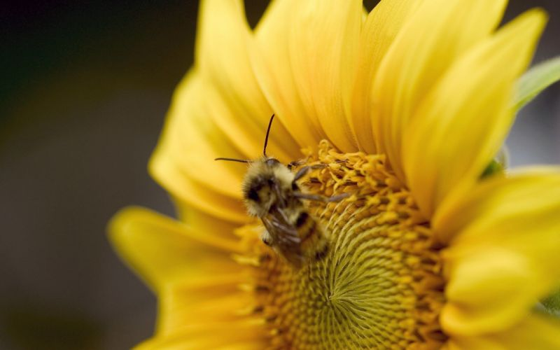 flowers insects bees wallpaper