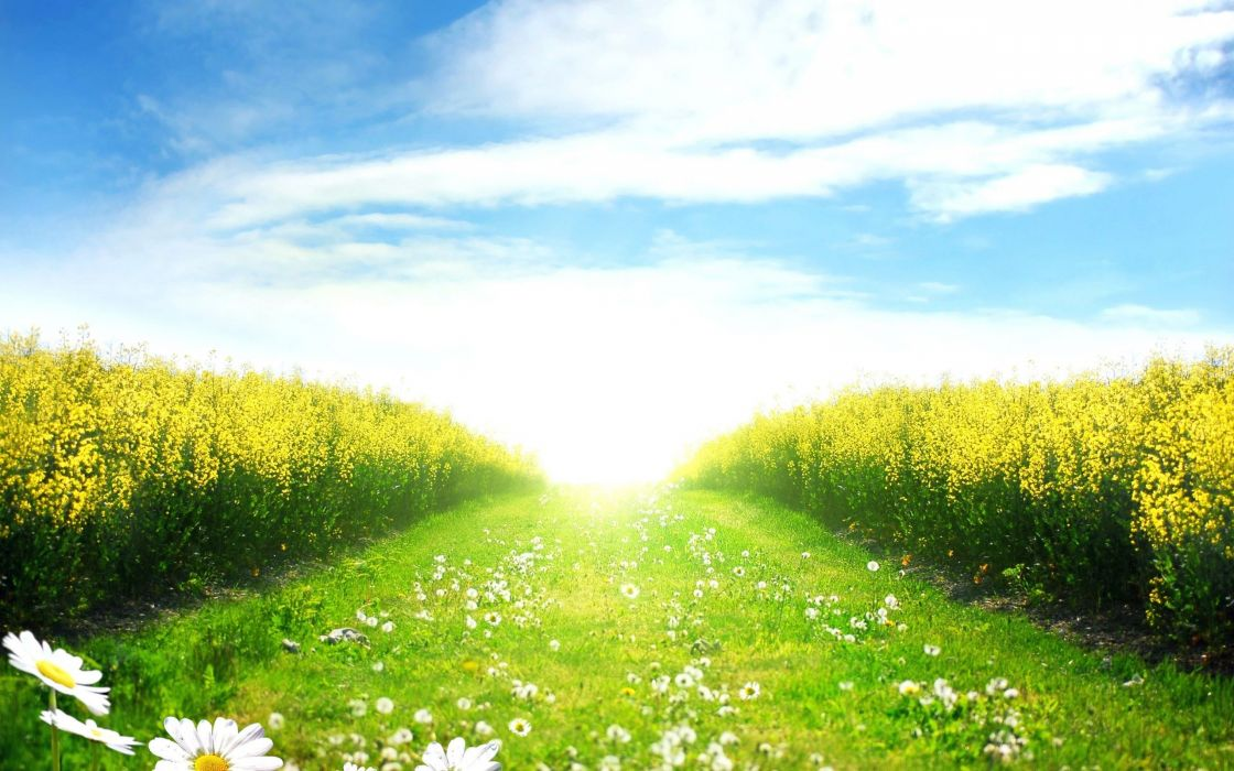landscapes nature flowers fields paths daisy sunlight wallpaper