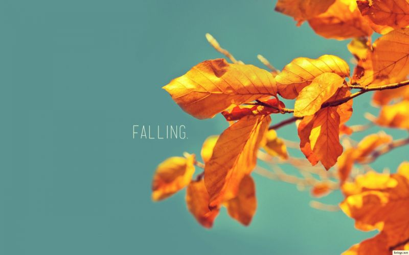 nature autumn leaves typography blue skies wallpaper
